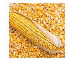 Гибридные семена кукурузы краснодарский 291 амв