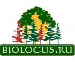 Биолокус – питомник саженцев деревьев и растений,